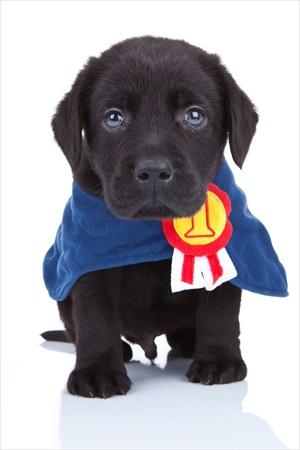 Battersea Park Dog Show