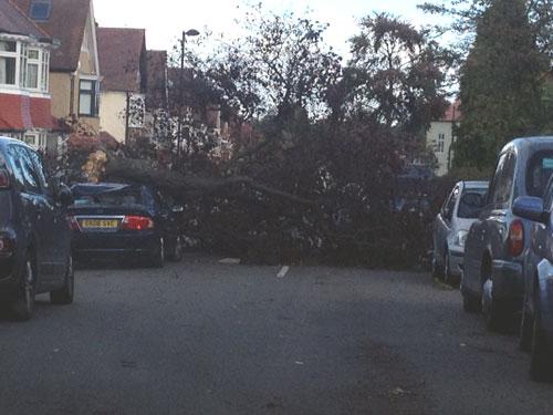 Fallen tree in Cheviot Road