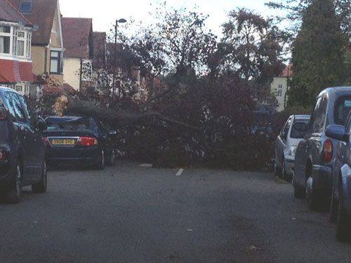 Fallen tree in Cheviot Road